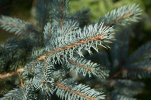 ¿Dónde puedo reciclar mi árbol de Navidad en Madrid?