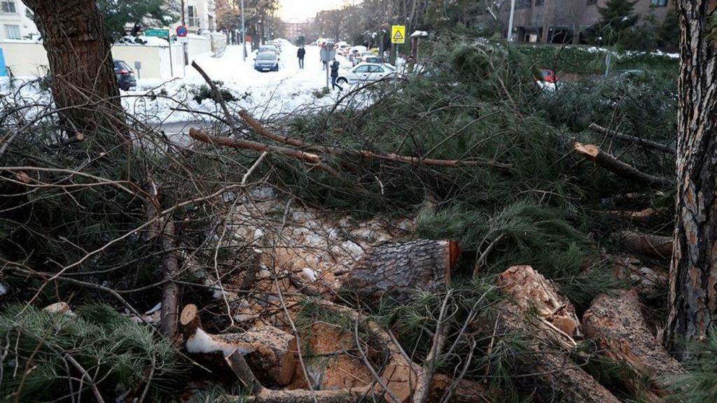 árboles-caídos-Filomena-Madrid