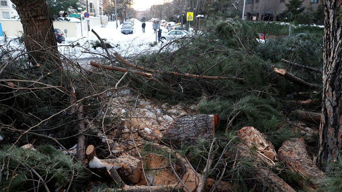 ¿Cómo convertir en energía verde los árboles destrozados por la nieve?