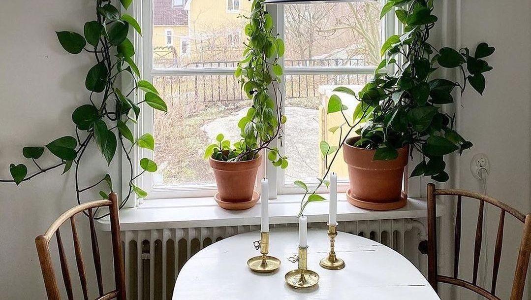El bienestar emocional y otros beneficios de tener plantas en casa
