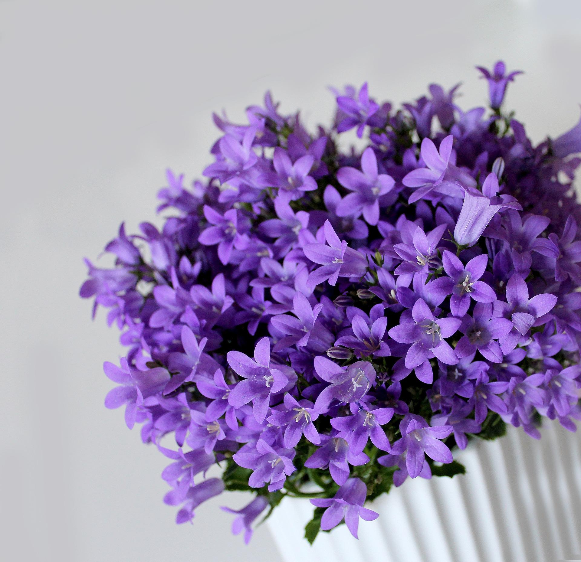 Plantas de interior, decorar con auténtica vida