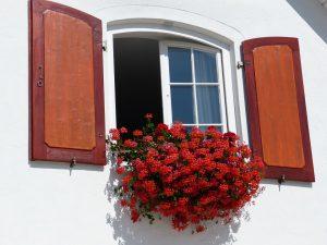 ventilar ventana flores
