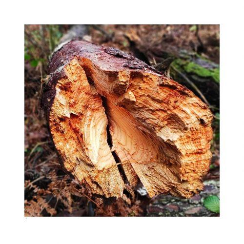 VEA árbol caído